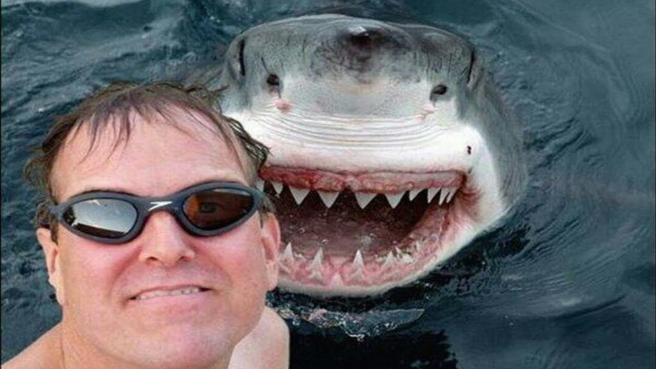 Les personnes suicidaires sont plus dangereuses que les requins