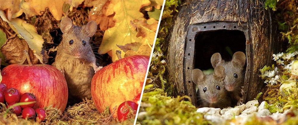 [Zone 42] Ce britannique est un véritable petit village pour les souris de son jardin