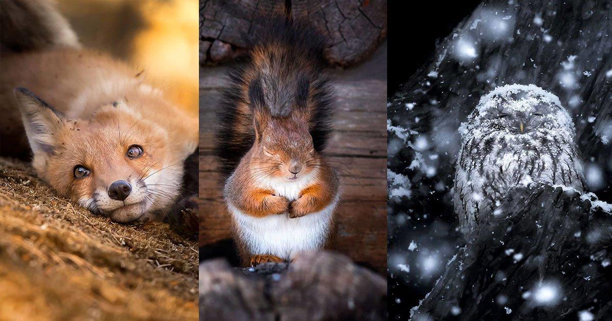 [Zone 42]  Ce photographe prouve que les forêts finlandaises sont miraculeuses